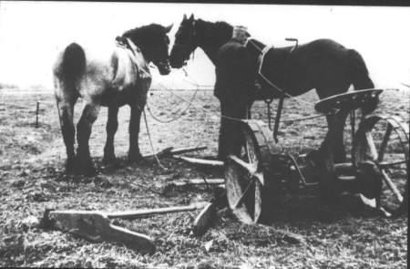 NR397 Jan Bootsma bij de paarden met maai machine