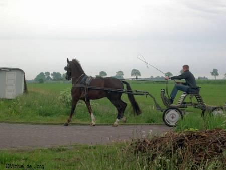 paard van fam Haarsma